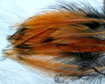 """Real Hackle Feathers Natural Cruelty Free Feathers Real Bird Feathers For Crafts Golden Laced Cochin Rooster Feather 20 @ 3 - 3.5"""" / 7339"""