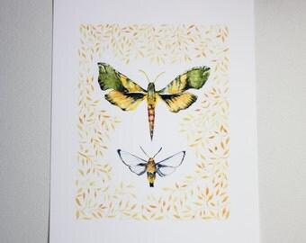 Moth Art Print • Watercolor Illustration • Decor • Wall Art