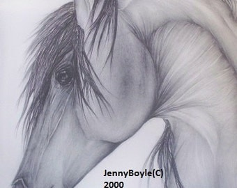 Arabian horse art 11x14 pencil drawing artwork print