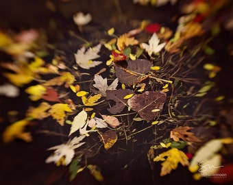 Fine Art Nature Photography of Fall Leaves, Still Life Photograph of Leaves, Fall Home Decor