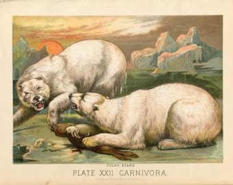 Antique Print of Polar Bears Color Lithograph 1880s Johnson's Household Book of Nature