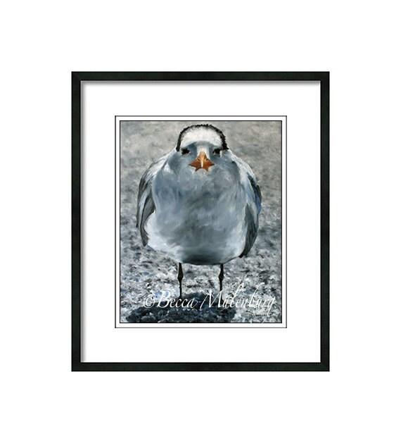 Royal Tern bird art PRINT shorebird beach bird wildlife nature