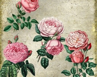 Digital PNG Images Four Pink Rose Blooms  Files You Print Digital Image Delicate Victorian Romantic Red Green
