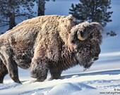 Buffalo Spirit Medicine Bundle
