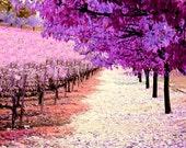 Lavender Dreams, enchantment, journey. pathway, garden, nature, natural, beginnings, meditation