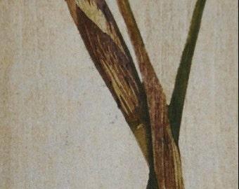 Original Hand Pulled Fine Art Print - Siberian Iris reduction woodblock OOAK Limited Edition Floral Moku Hanga