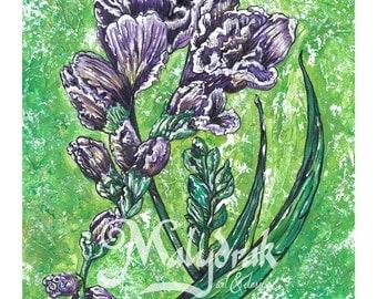 Purple Freesia - Art Print
