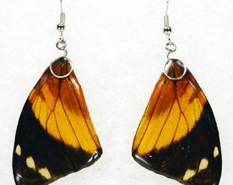 Real Butterfly Earrings - Smyrna Bloomfeldia - Hand Cast Resin