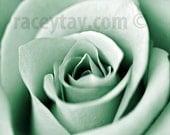 Mint Flower Print, Rose Photos, Mint Wall Art, Flower Photography, Macro Flower Photos, Mint Rose Prints, Shabby Chic Wall Art Paris Prints