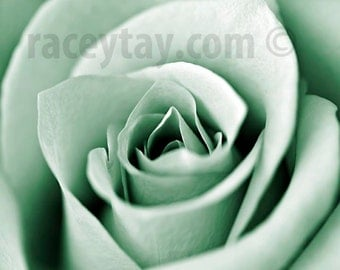 Mint Decor, Rose, Flower Photography, Macro Flower Photo, Mint Green, Pastel Wall Art Print