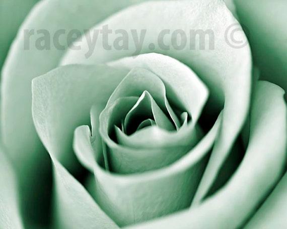 Mint Decor, Rose, Flower Photography, Macro Flower Photo, Mint Green, Pastel Wall Art Print