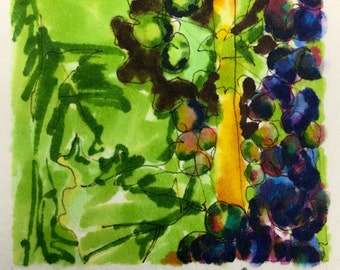 Grape series 1