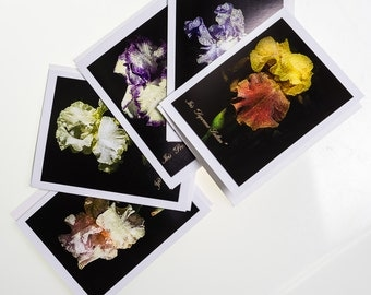 Iris Flower Note card Set. Set of 5 photo cards blank inside.  Each card shows a different photograph.