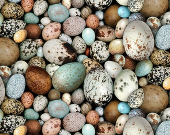 Bird Eggs - Elizabeth Studios - Half Yard