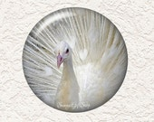 "Your Choice of 3.5"" or 2.25"" Peacock Pocket Mirror with Black Velour Bag Buy 3 Get 1 Free  046"