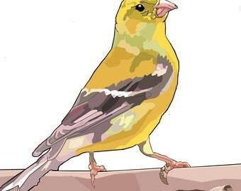 Goldfinch Dye Print