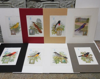 8 vintage bird prints Singer Sewing machine advertising American Song Birds w/ eggs series Variety on mat board