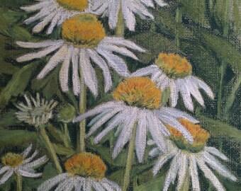 Cone flowers, summer, white, garden