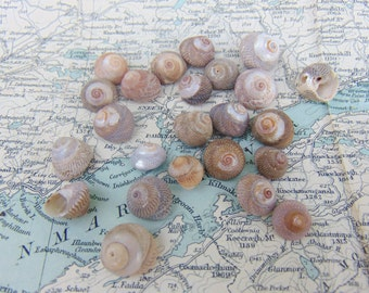 Irish Sea Shells Natural Seashells Beach Shells from Ireland Shells Craft Shells Shells for Crafts or Jewellery Jewelry Making