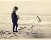 Young Boy FEEDING GULLS at The BEACH in Artistic Photo Circa 1910s