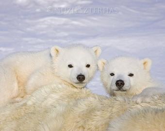 Baby Polar Bears Photo Print, Baby Animal Photograph, Wildlife Photography, Wall Decor, Animal Nursery Art, Bear Cub, Winter, Animal Twins