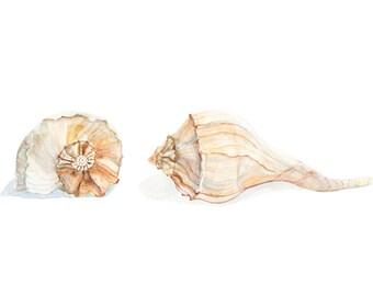 Seashell art, sea shells watercolor print, sea shells home decor, sea shell art giclee, whelk conch print, beach cottage art, matted 11x14