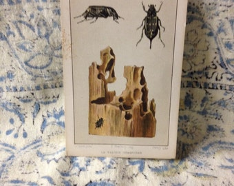 beetle learning card le valgue hemiptere vintage flashcard school french insect learning bug