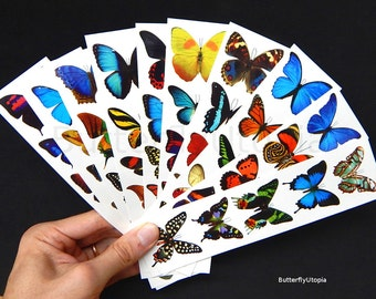 Temporary Butterfly Tattoos - 10 Sheets (Free Shipping!)