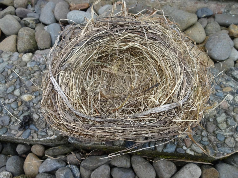 Birds Nest Natura Birds Nest Nest Home Decor Nest For