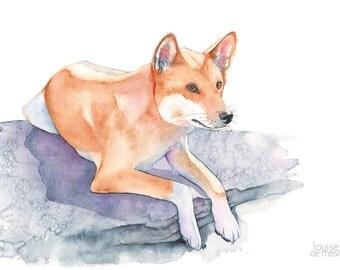 Dingo print of watercolor painting, dingo watercolour painting, australian animal art, D14016, 5 by 7 print, Dingo painting