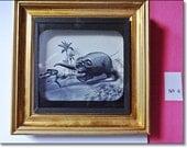 Magic Lantern Slide, Victorian Glass Slides, Victorian Toys, Elephants Revenge, Lantern Slides No. 4