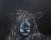 The Isobel the Leicester Longwool Ewe Sheep,  Greetings Card
