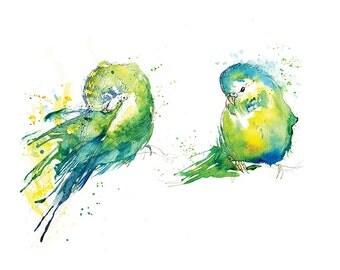 Giclee Fine Art Print: Green Budgie Preen Watercolour Painting