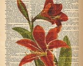 Dictionary Art Print - Red Amaryllis Flower - Upcycled Vintage Dictionary Page Poster Print - Size 8x10