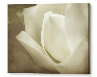 Southern Magnolia Sepia Cream Brown Canvas Wrap, Soft Dreamy Zen Ethereal Flower Floral Fine Art Photography on Giclee Gallery Wrap Canvas