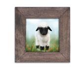 Lamb Baby Nursery Art, Kids Wall Art, Farm Animal Art, Shabby Chic Rustic Art