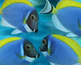 Powder Blue Tangs Tropical Artwork  Fine Art  Prints Various Sizes