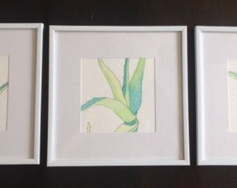 Aloe Watercolor Set