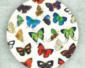 Butterfly group I melamine plate