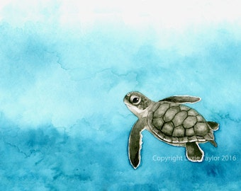 Green Sea Turtle Hatchling (Chelonia mydas) Gilcee Print
