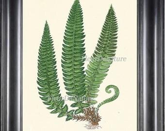 Antique Fern Print Botanical Art 12 Beautiful Green Ferns Forest Summer Plant Nature to Frame Home Wall Decor 4x6 5x7 8x10 11x14