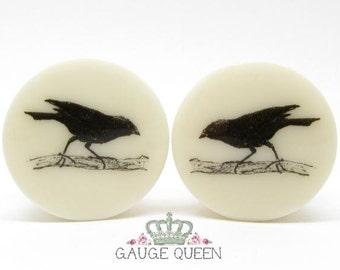 "Vintage Blackbird Plugs / Gauges. 4g /5mm, 2g /6.5mm, 0g /8mm, 00g /10mm, 1/2"" /12.5mm, 9/16""/14mm, 5/8""/16mm, 3/4""/19mm, 7/8""/22mm, 1""/25mm"
