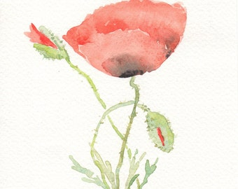 Poppies, original watercolour, Flower art, Red Wild flowers, Botanical, Wildflowers, Coquelicots, red flowers, poppies, summer flowers