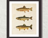 Vintage Trout Print - Giclee Canvas Wall Hanging No. 1,Fish Art, Fly Fishing, Rustic Home Decor, Angler Art, Fish Print, Print, Poster