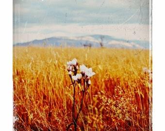 Wild - flower, landscape photography, grassland, wilderness, freedom, whimsy, vintage, rustic, art photography, skehan