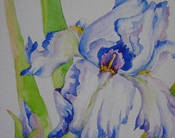 White/purple iris original watercolor greeting card painting small format