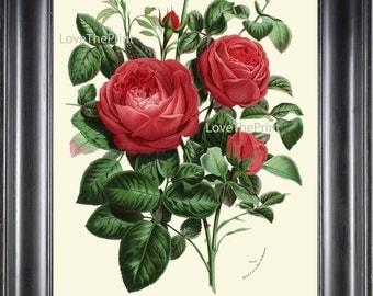 BOTANICAL PRINT HOUTTE  Art Print 148 Beautiful Antique Red Rose Rosebuds Roes Flower Spring Summer Nature Garden Home Room Wall Decor