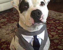 Large Gray Tuxedo with your choice of color of tie.