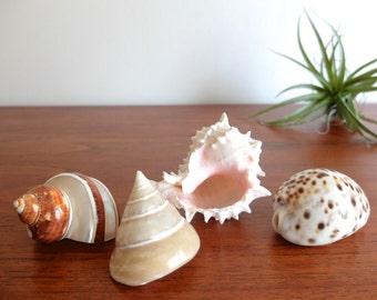 4 vintage seashells