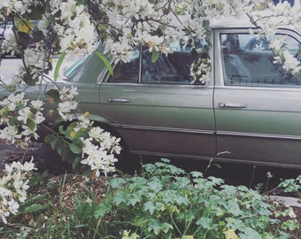 Retro Car +  Spring Flowers / Highland Park